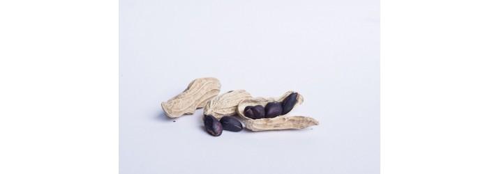 低溫烘培堅果